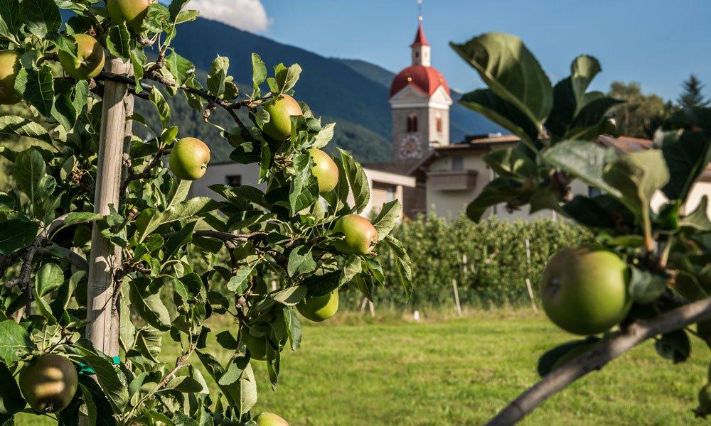 Escursione delle mele
