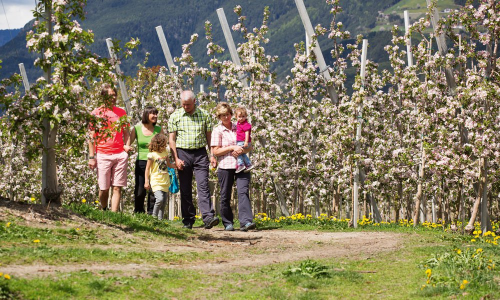 Our Apple Path – simply a must see
